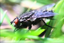 У мужчин и женщин мозг чрезвычайно похож - по крайней мере у мух!