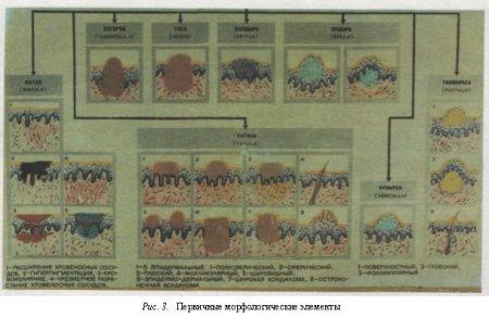 Первичные морфологические элементы