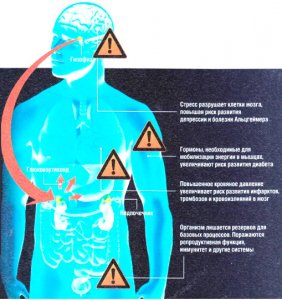 Генная терапия против стресса