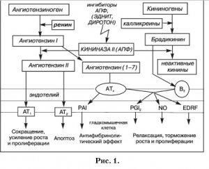 Применение ингибиторов ангиотензинпревращающего фермента в клинической практике